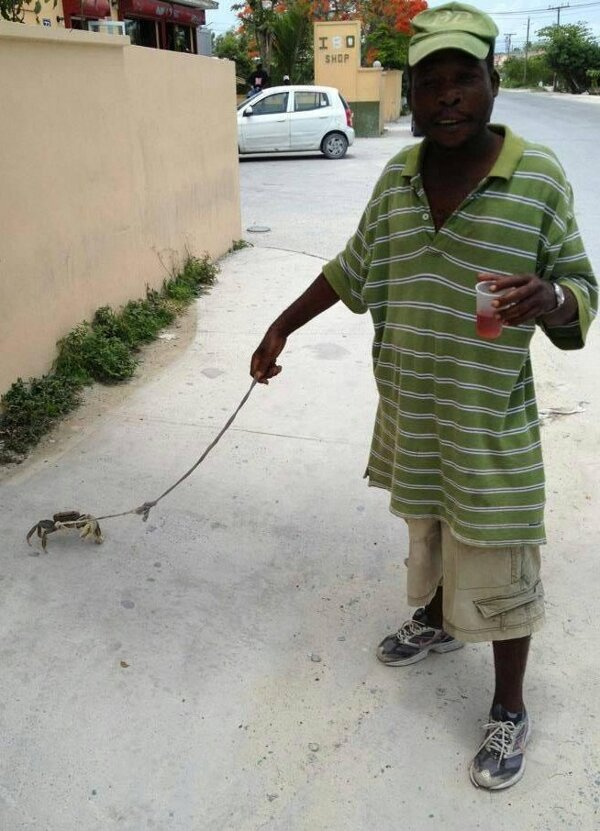 Just a dude walking his crab