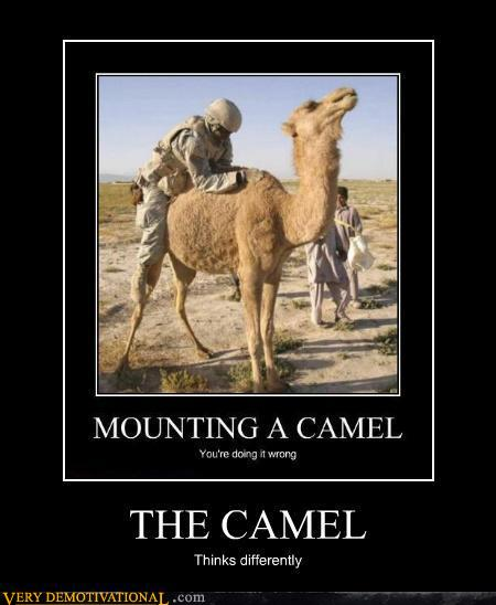 The Camel Funny Photo Day For Tuesday May From Site