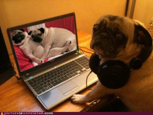 Funny Photo Of The Day For Sunday December From Site - 23 hilarious photos of pets caught red handed