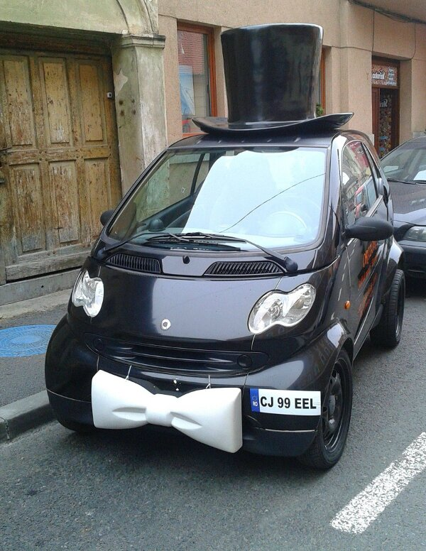 Permalink To Funny Photo Of The Day White Bow Tie Smart
