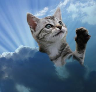 Gone to Heaven   Jokes of the day (52075)
