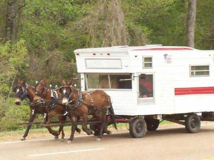 Funny Photo Of The Day For Monday 07 March 2016 From Site Jokes Of The Day Amish Camper Cabins
