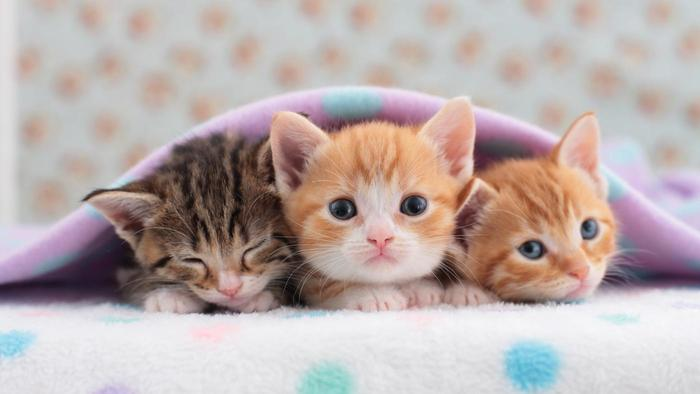 Kittens | Jokes of the day (54909)