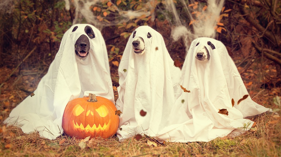 12 Funny Halloween Ghost Jokes